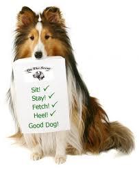 Lyne Fete Dog Show